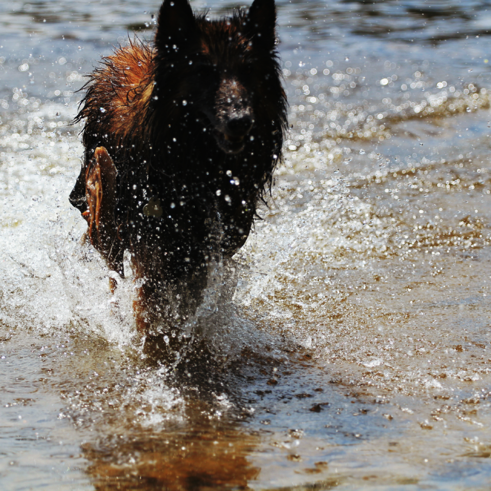 Wasser-Shooting